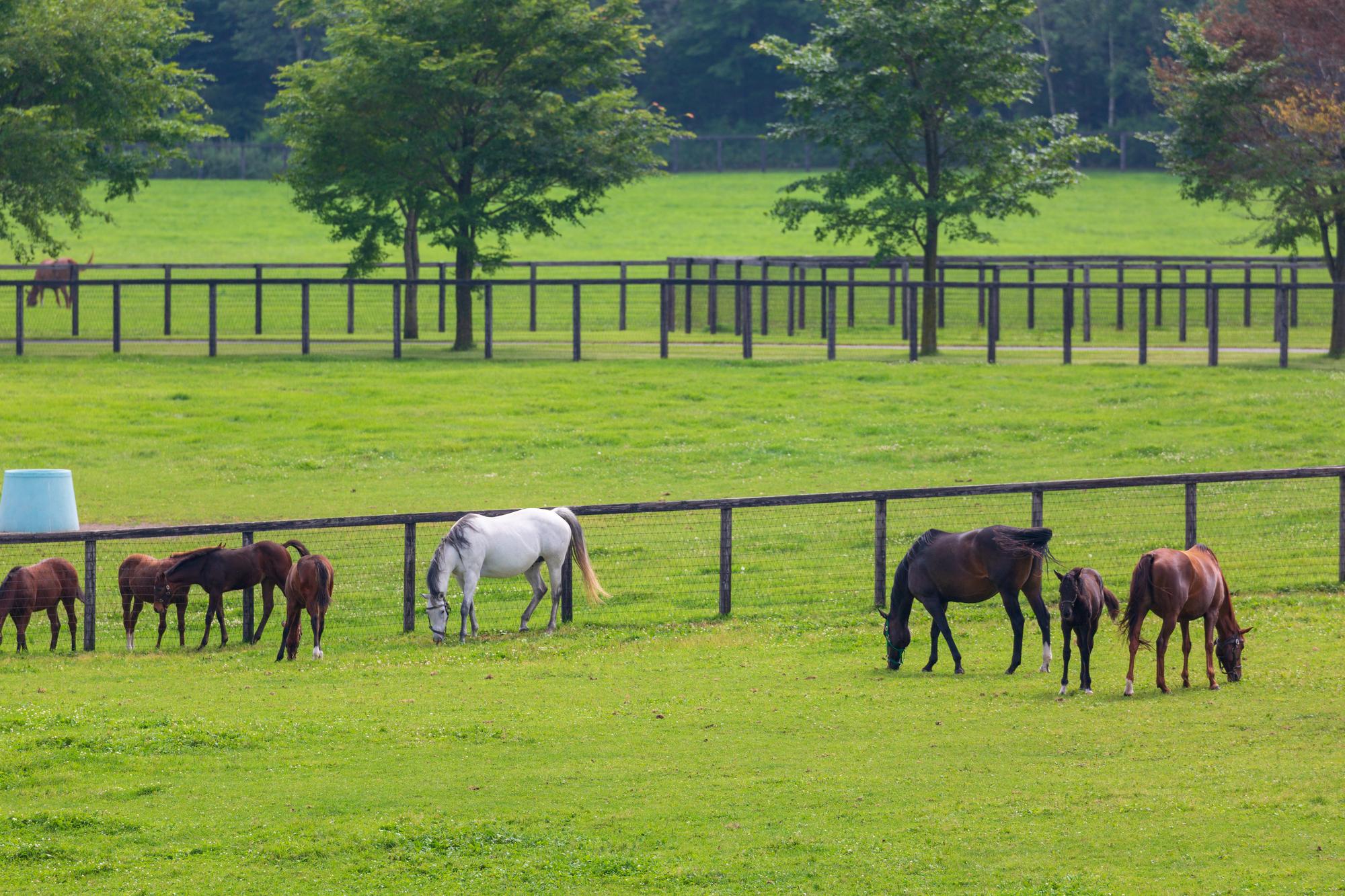 競馬予想屋は馬のどのようなところを見ているのか